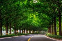 Riding through metasequoia Stock Image
