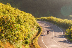 Riding a motorcycle through the field of flowers on the mountain Stock Images