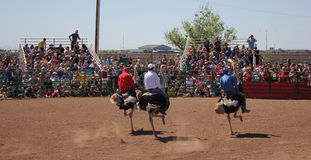 Riding ostrich race festival Royalty Free Stock Photography