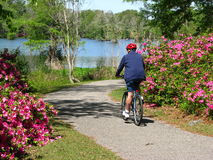 Riding in the park. Picture of a male bicyclist riding in Greenfield Park, Wilmington, North Carolina Royalty Free Stock Image