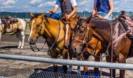 Riding saddled horses Royalty Free Stock Photo