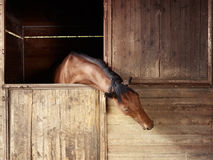 Riding school: horse looking out of stable Stock Photo