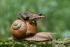 Riding a snail Royalty Free Stock Photo