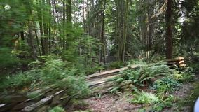 Riding the train through Stanley Park stock video footage