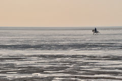 Riding in wadden sea. Horse riding in wadden ea germany Royalty Free Stock Photo