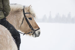 Riding in a winter landscape Royalty Free Stock Images