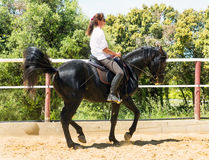 Riding woman on stallion Royalty Free Stock Photo