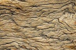 Ridit ut trä royaltyfri bild