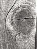 ridit ut trä royaltyfria bilder