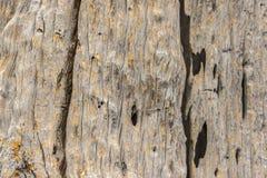 ridit ut trä Arkivfoton