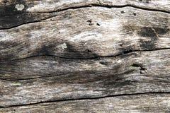 Ridit ut trätexturnärbildfoto Gammal timmer med red ut sprickor Drivvedbakgrund Lantlig closeup f?r tr?dstam royaltyfria bilder