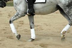 Ridng de cheval Photos stock