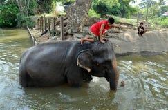 ridning thailand för ayutthayapojkeelefant Fotografering för Bildbyråer