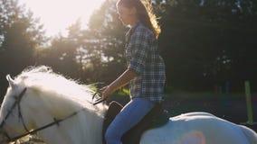 Ridninghäst för ung kvinna under en sommarsolnedgång långsam rörelse arkivfilmer