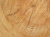 Riduca l'albero Fotografie Stock