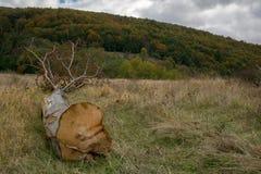 Riduca l'albero fotografia stock libera da diritti