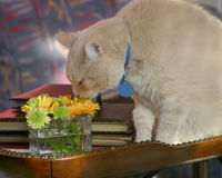 Riechen Sie die Blumen Lizenzfreies Stockbild