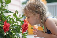 Riechen Sie die Blumen Lizenzfreies Stockfoto