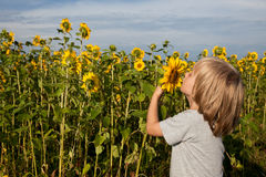 Riechen Sie die Sonnenblume Lizenzfreie Stockbilder