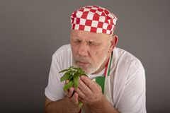 Riechende Basilikumblätter des reifen italienischen Chefs stockfoto