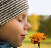 Riechende Blume des Jungen im Herbst Stockfoto