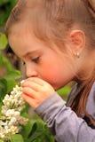 Riechende Blumen Stockbild