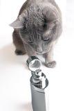 Riechende Phiole der Katze mit Duftstoffen Stockbild