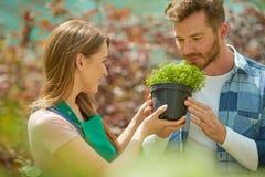 Riechende Topfpflanze des Mannes Stockfoto
