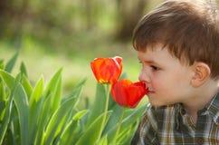 Riechende Tulpe des kleinen Jungen Stockfoto
