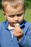 Riechendes Gänseblümchen des Kindes Stockfotografie
