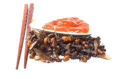 Ried ant - fried  subterranean ants Stock Photos