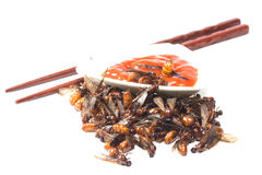Ried ant - fried  subterranean ants Royalty Free Stock Photography