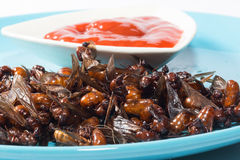 Ried ant - fried  subterranean ants Royalty Free Stock Photos