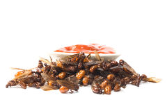 Ried ant - fried  subterranean ants Royalty Free Stock Images