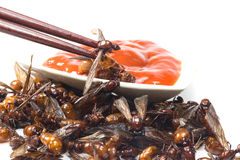 Ried ant - fried  subterranean ants Stock Photography
