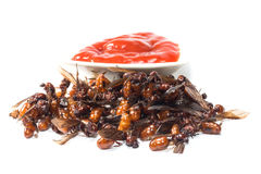 Ried ant - fried  subterranean ants Stock Photo