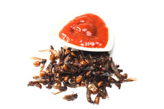 Ried ant - fried  subterranean ants Royalty Free Stock Image