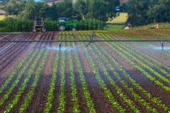 Riego artificial en agricultura Fotos de archivo