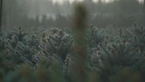 Riego automático de pequeños pinos metrajes