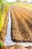 Riego de cosechas agrícolas, campo, irrigación, riego natural farming campo arado después del cultivo preparado para el pl imagenes de archivo