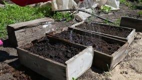 Riego de la cama del jardín con las semillas del eco almacen de metraje de vídeo