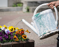 Riego de las flores Imagen de archivo libre de regalías