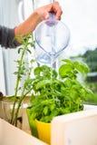 Riego de las hierbas de la cocina Fotos de archivo