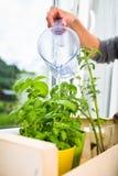 Riego de las hierbas de la cocina Fotografía de archivo libre de regalías