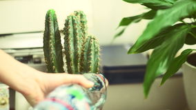 Riego de un cactus metrajes