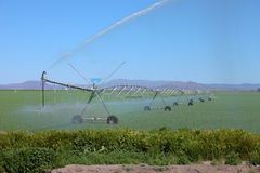 Riego de un campo de la alfalfa, Oregon del sur. Fotos de archivo libres de regalías