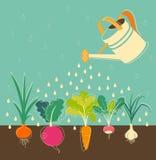 Riego del jardín de verduras Imágenes de archivo libres de regalías