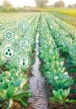 Riego natural de la agricultura Altas tecnologías e innovaciones en agroindustria Calidad del estudio del suelo y de la cosecha c fotos de archivo libres de regalías