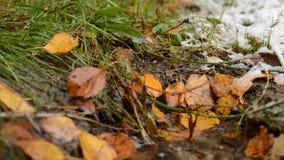 Riegue el aterrizaje del descenso en el pequeño charco rodeado por la hoja del otoño y la hierba verde almacen de metraje de vídeo