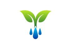 Riegue el símbolo de los descensos logotipo, del rocío y de la planta, icono de la primavera Fotos de archivo libres de regalías